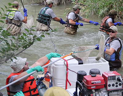 A group of scientists in a stream with hand nets