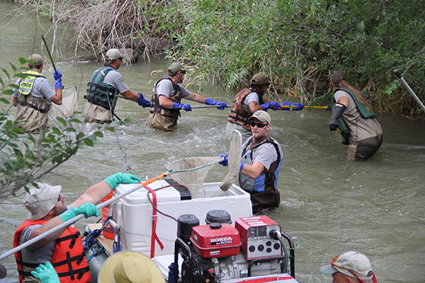 group of people in the river with handheld nets