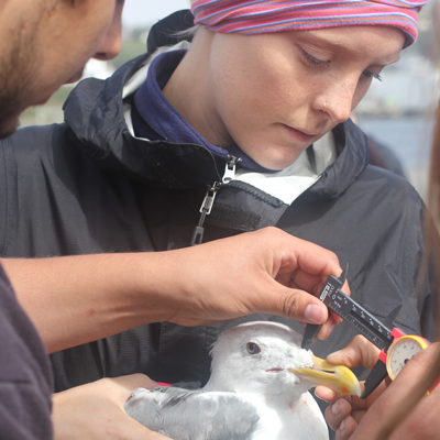 Students taking measurements of a gull